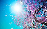 Фотообои Цветущая сакура