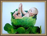 Картина в багетной раме Дитя в капусте. 300х400мм №511