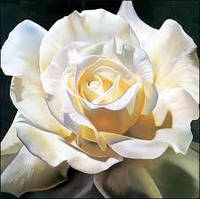 Ароматизатор для свечей Роза Белая 5 мл