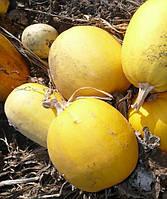 Семена тыквы Болгарка (Дамский Ноготь) на семечку, 0,5 кг