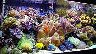 Обслуживание декоративных морских аквариумов с рыбой