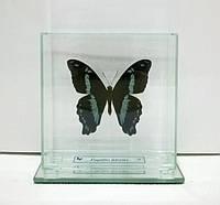 Сувенир - Бабочка под стеклом Papilio nireus