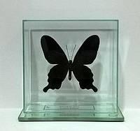 Сувенир - Бабочка под стеклом Pachliopta kotzebuea