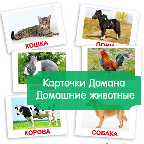 """Карточки Домана """"Домашние животные"""" с фактами"""