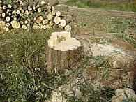 Услуги уничтожения растительности