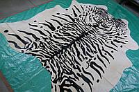Шкура коровы крашенная под сибирского или уссурийского тигра на белом фоне