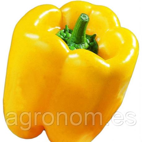 Cемена перца Сатрапо F1 1000 семян Kouel