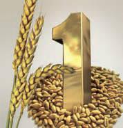 Пшеница озимая сорт Балетка (Сингента) НОВИНКА!