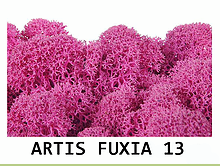 Стабилизированный мох. Цвет Artis Fuxia 13, фото 2