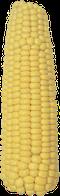 Насіння кукурудзи РАМ 1333 (ФАО 180)