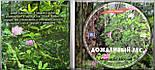 Музичний сд диск ДОЖДЛИВЫЙ ЛЕС (2005) (audio cd), фото 2