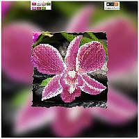 """Схема для вышивки бисером на подрамнике (холст) """"Орхидея"""""""
