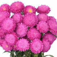 Bonita Pink