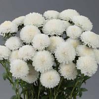 Bonita White