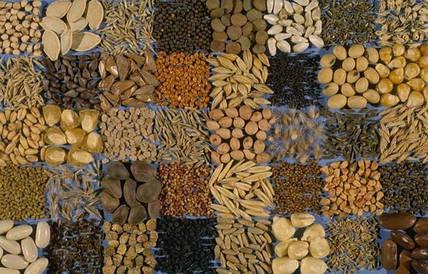 Семена, посадочный материал