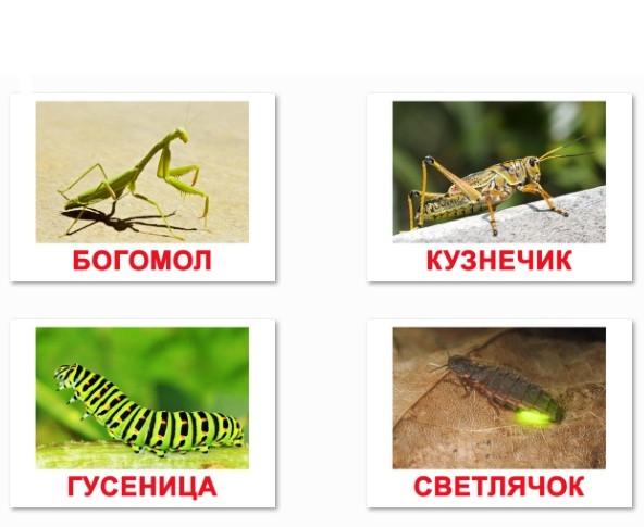 карточки Домана Насекомые с фактами