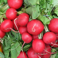 Cемена редиса Корунд 250 грамм Kouel
