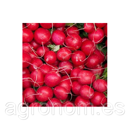 Cемена редиса Красный Гигант 250 грамм Kouel