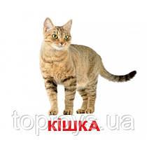 Комплект карточек - Домашние Животные 20 (украинский язык)