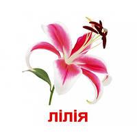Комплект карточек - Цветы 20 (украинский язык), фото 1