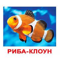 Комплект карточек - Жители Водоемов 20 (украинский язык), фото 1