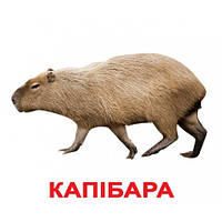 Комплект карточек - Экзотические Животные (украинский язык)