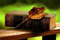 Купить кандидатскую диссертацию в Украине Услуги на ua Качественная кандидатская диссертация на заказ по филологическим наукам