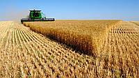 Покупка зерновых культур.