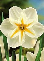 Нарцисс Split Corona Лемон Бьюти, купить луковицы цветов