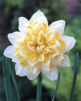 Нарцисс махровый Irene Copeland, купить луковицы цветов