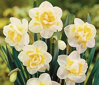 Нарцисс махровый White Lion, купить луковицы цветов
