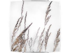 BROWN GRASS 7