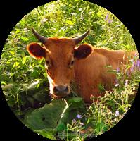 купить семена кормовых культур в интернете