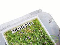 Люцерна посевная сидерат 500г на 4 сотки