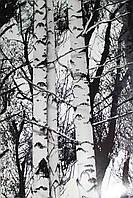 Самоклейка березы черно-белые 45 см