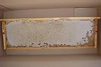 Мёд в сотах (рамке)