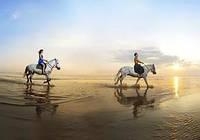 Романтические прогулки на лошадях по НОЧНОМУ городу (центр, набережная)