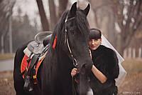 Наши лошади на свадьбе