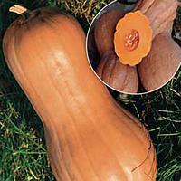 Cемена тыквы Виолина 50 грамм Kouel