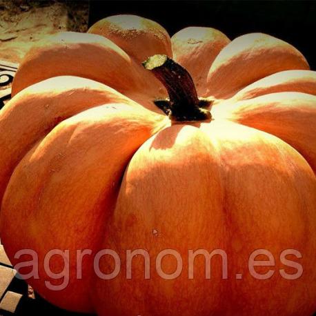 Cемена тыквы Мускат де Прованс 5 кг Kouel