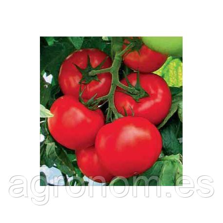 Cемена томата Акрай F1 1000 семян Kouel