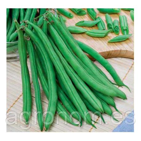 Cемена фасоли Скуба 250 грамм Kouel