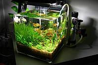 Аквариум ADA Cube Glass 60×30×36 см