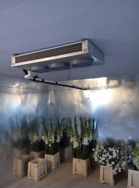 Холодильная камера для охлаждения и хранения цветов (3х4,2х2,5h)! г.Киев 7