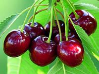 Вкусовая добавка для сладкой ваты со вкусом вишни