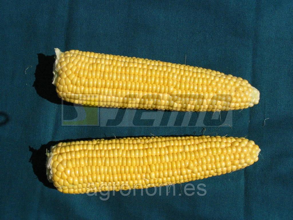 Семена кукурузы Анита F1 0,5 кг Semo