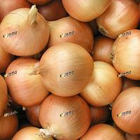 Семена лука Люси 500 грамм Semo