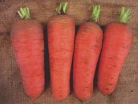 ШАМАРЭ / CHAMARE — морковь, SEMO 500 грамм