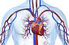 Диагностика и профилактика сердечно-сосудистых заболеваний