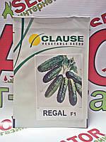 Семена огурца Регал F1, 10 г Clause (Клоз), Франция